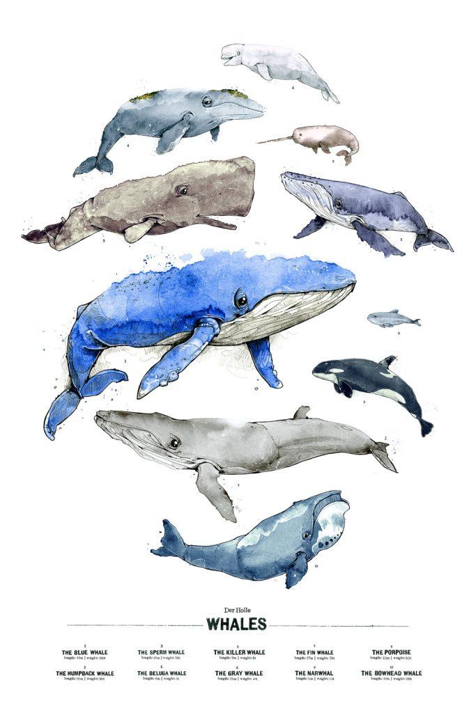 Illustration Wale